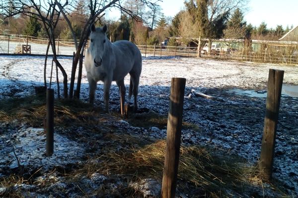 Setzen wir in der Ernährung für Reiter dieselben Maßstäbe an wie für unsere Pferde?