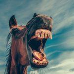 Mentales Training für Reiter