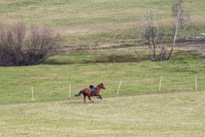 Tipps und Bewältigungsstrategien, wenn man zu Muskelverkrampfungen auf dem Pferd neigt.