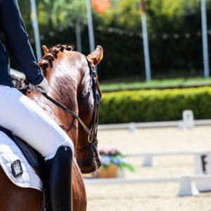 Das ABC der Hufschlagfiguren zeigt Dir kurz und kompakt, was Du wissen musst, um effektiv mit Deinem Pferd zu arbeiten, um es gesünder zu machen.